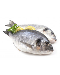 SENSIStrip Рыба (parvalbumin), быстрый тест, Eurofins