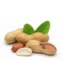SENSIStrip Peanut (Арахис), быстрый тест, Eurofins